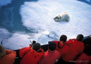 Arctic Polar Bear