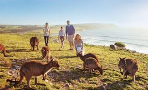 Australia Stokes bay Kangaroo